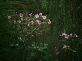 Rafinované průhledy spojují jednotlivé pohledové jednotky, na které je zahrada členěna.