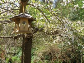 Krmítka jsou nedílnou součástí přírodní zahrady. Je pravda, že pak jste v létě rádi, když vám ptáci nechají alespoň pár malin, ale zimní péče o ně je nutností.