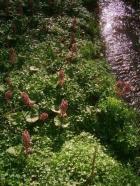 Jiskřivý potůček protékající zahradou je lemován původními porosty devětsilů a přináší do kompozice neustálý pohyb a zurčení.