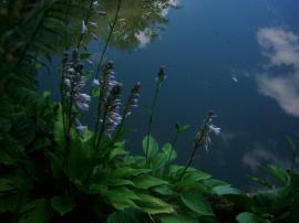Odraz pobřežních rostlin ve vodní hladině je všudypřítomný.
