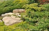 Ilustrační foto (www.shutterstock.com), jalovce - juniperus