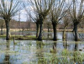 Ilustrační foto (www.shutterstock.com), vrbě se daří i na extrémně zamokřených pozemcích