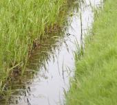 Ilustrační foto (www.shutterstock.com), meliorační kanál naplněný vodou