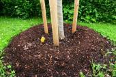 Ilustrační foto (www.shutterstock.com), dřevina s přihrnutou zeminou a mulčovací rašelinou
