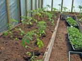 Ilustrační foto (www.shutterstock.com), kvalitní půda ve skleníku