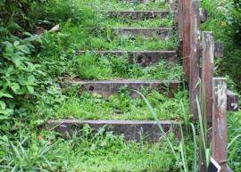 Ilustrační foto (www.shutterstock.com), zatravněné schody