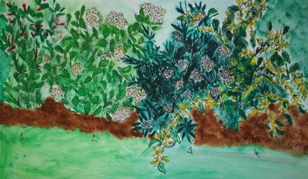 Obr: ČESKÉSTAVBY.cz, 1.) kdoulovec (Chaenomeles speciosa), 2.) tavolník (Spirea vanhouttei, cinerea), 3.) hlohyně (Pyracanta coccinea), 4.) zlatice (Forsythia intermedia)