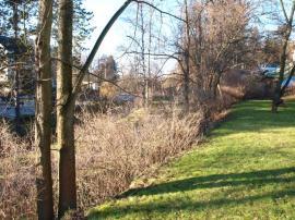 Foto: ČESKÉSTAVBY.cz, současný živý plot v dolní části zahrady, který bude nahrazen jinými druhy a bude doplňovat z vnější strany oplocení z drátěného pletiva