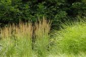 Ilustrační foto (www.shutterstock.com), okrasné trávy