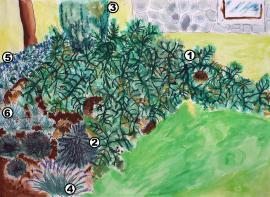 Obr: ČESKÉSTAVBY.cz, výsadba části svahu - 1. skalník vodorovný; 2. smrk stříbrný; 3. jalovec obecný; 4. levandule úzkolistá; 5. kamejka - skalnička; 6. nízké okrasné trávy