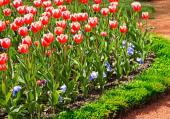 Ilustrační foto (www.shutterstock.com), tulipán