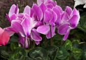 Ilustrační foto (www.shutterstock.com), brambořík