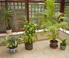 Ilustrační foto (www.shutterstock.com), rostliny v zimní zahradě