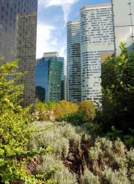 Ilustrační foto (www.shutterstock.com), intenzivní zelená střecha mezi výškovými budovami