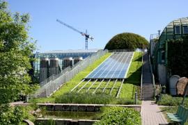 Ilustrační foto (www.shutterstock.com), extenzivní zelená střecha, v pozadí kopule porostlá popínavkami