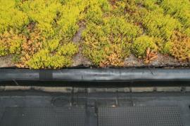 Ilustrační foto (www.shutterstock.com), zakončení zelené střechy