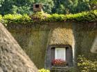 Ilustrační foto (www.shutterstock.com), živoucí historie zelených střech