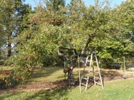 Foto: Ing. Hana Zachariášová, Ovocný sad jako přirozená součást venkovské zahrady