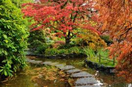Ilustrační foto (www.shutterstock.com), svěží podzim hýří barvami listí