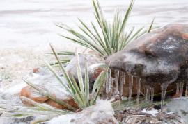 Ilustrační foto (www.shutterstock.com), krása zimy je v detailech