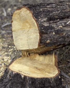 Ilustrační foto (www.shutterstock.com), čerstvě pokácený strom