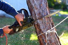 Ilustrační foto (www.shutterstock.com), kácení stromu