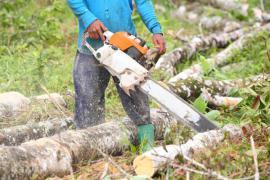 Ilustrační foto (www.shutterstock.com), zpracování pokáceného stromu