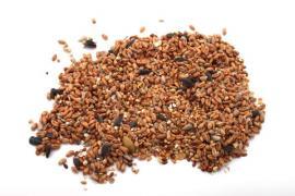 Ilustrační foto (www.shutterstock.com), běžné krmivo