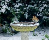 Ilustrační foto (www.shutterstock.com), zdroj vody pro ptáky