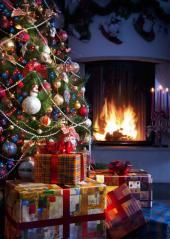 Vánoční borovice
