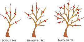 Výchovný, zmlazovací a tvarovací řez