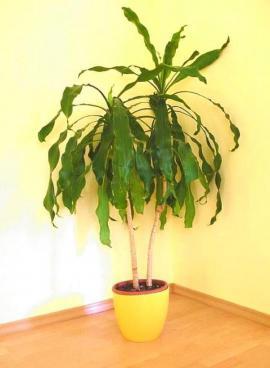 Pokojová rostlina v květníku