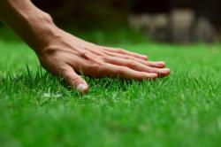 Pěstěný trávník