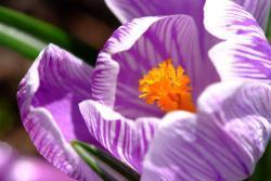 Jeden z barvitých poslů jara