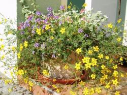 Květinový ráj na vnějším okenním parapetu