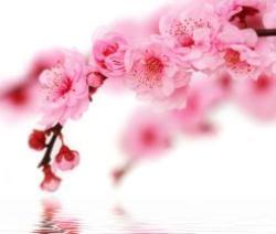 Záplava jemných květů