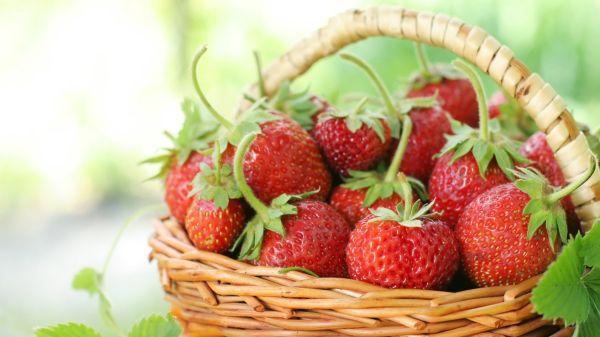 Jahody - sklizeň, na kterou se celý rok těšíme, jeden z našich nejchutnějších ovocných plodů