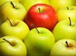 V září typická sklizeň jablek