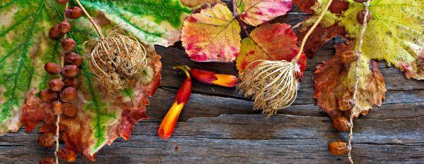 Barevné kouzlo podzimu