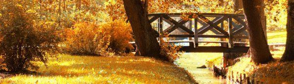 V listopadu už zmizí pestré barvy, vše zezlátne, zhnědne a opadá