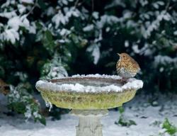 Kromě krmítka je pro ptáky důležitý i zdroj čerstvé vody