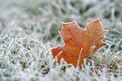 Za mrazu na trávník nevstupujte, pokud není pokryt sněhovou pokrývkou