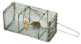 Myš v klecové pasti
