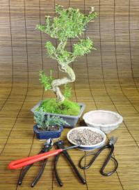 Bonsai, nástroje pro ošetřování bonsaje