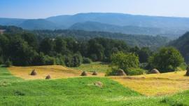 Zemědělské a lesní pozemky
