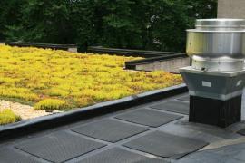 Zelená plochá střecha, vrstva substrátu zde funguje jako další dodatečná izolace, provedení je ale náročné a drahé