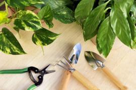 Potřebné nástroje k přesazování rostlin, kypření půdy a zastřihávání poškozených kořenů