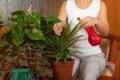 Pokojovky nejen zaléváme, ale i rosíme