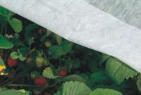 Geotextilie určená k ochraně rostlin
