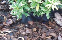 Geotextilie zamezující růstu plevele (mulčovací)